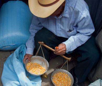 selling corn(1)