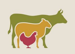 Genome editing and farmed animals