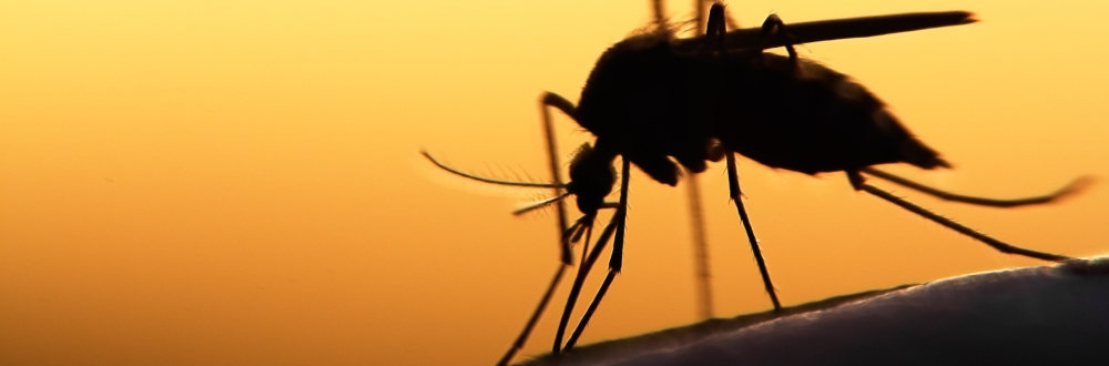 Zika: ethical considerations